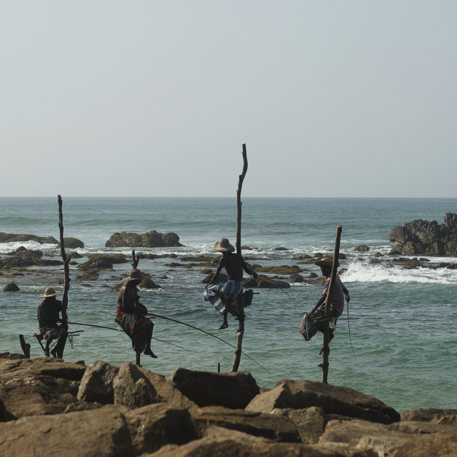 """Stilted Fishermen in Sri Lanka"" stock image"