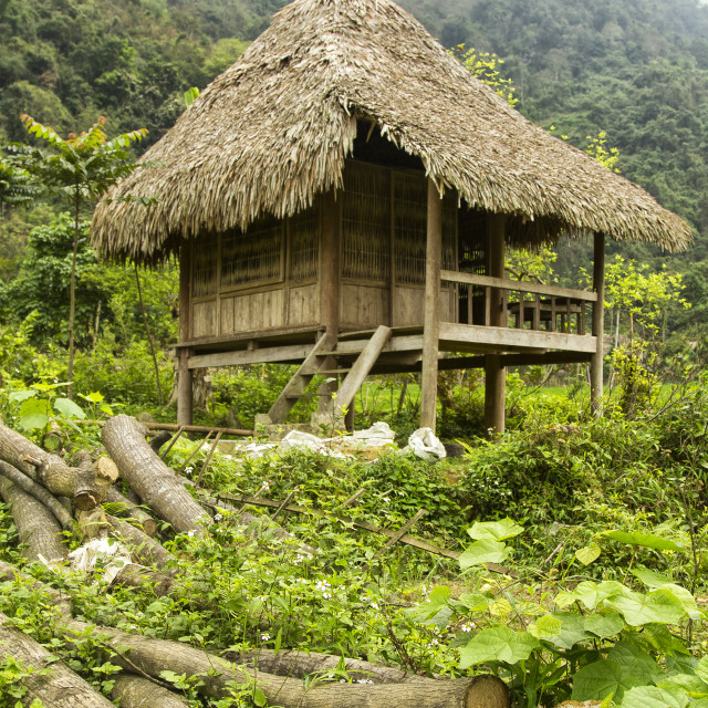 """Jungle Hut"" stock image"