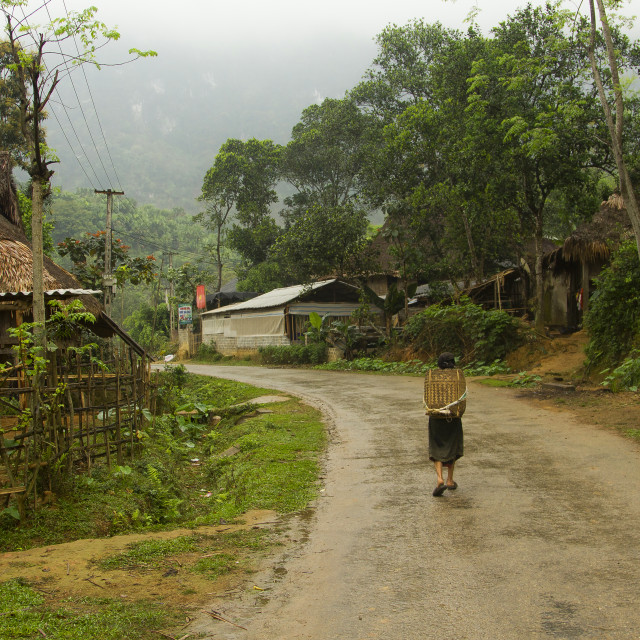 """Jungle Path"" stock image"