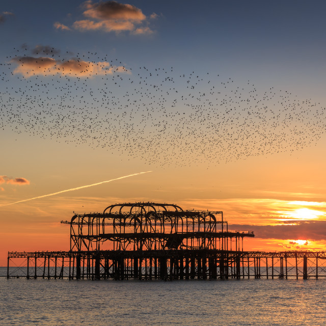 """Starling over the West Piers"" stock image"