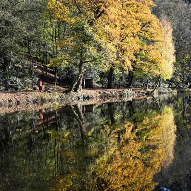 """Autumn Colours Reflected"" stock image"