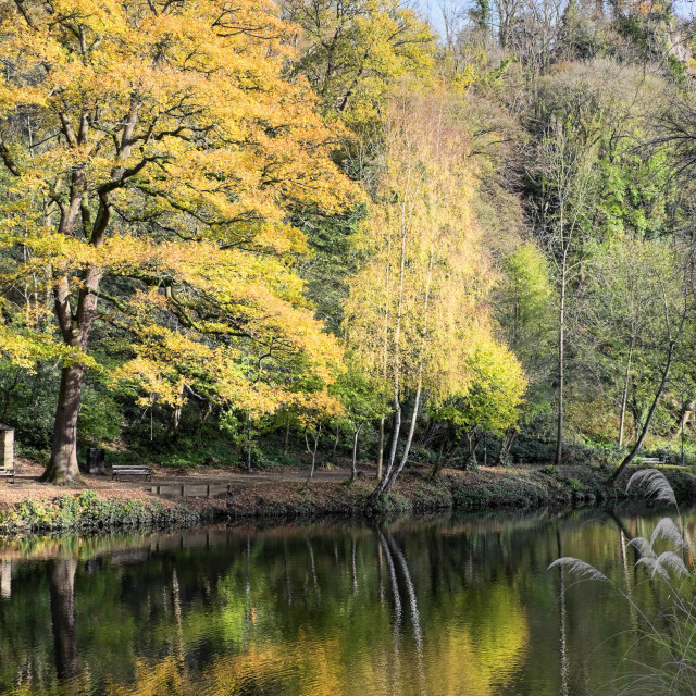 """Autumn Colours Reflected #2"" stock image"