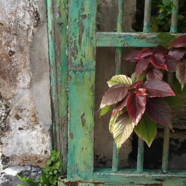"""Colours of Bermuda"" stock image"