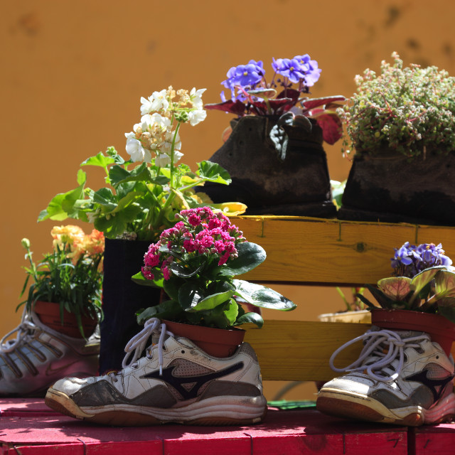 """""""Island Madeira, floral decoration, art object, planted shoes, flower decoration"""" stock image"""
