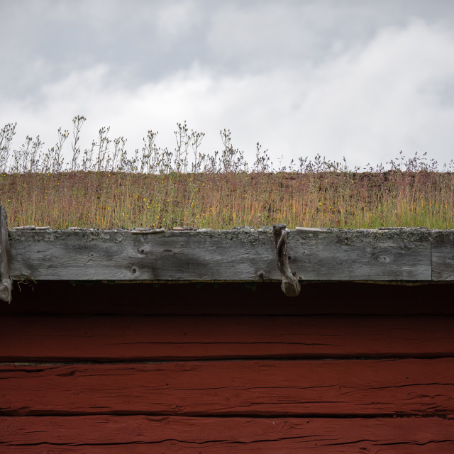 """Grass roof"" stock image"