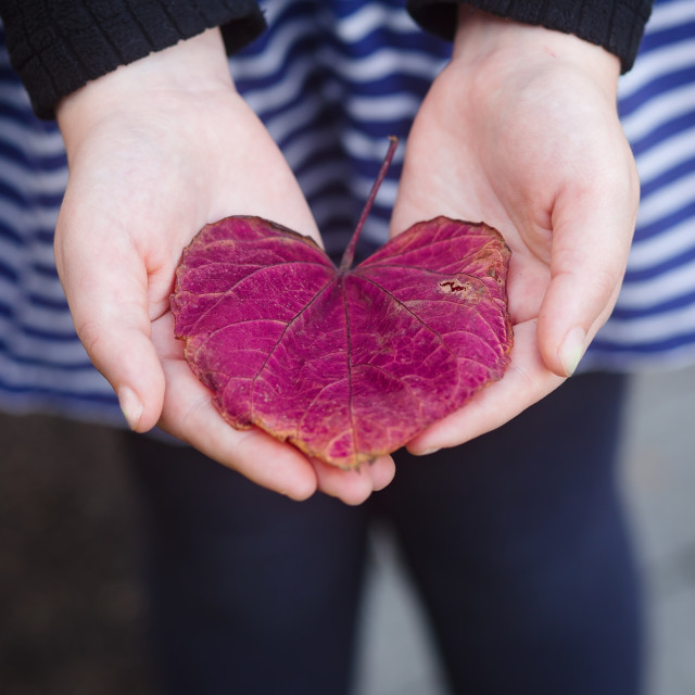 """""""A Heart Shaped Flower for You"""" stock image"""