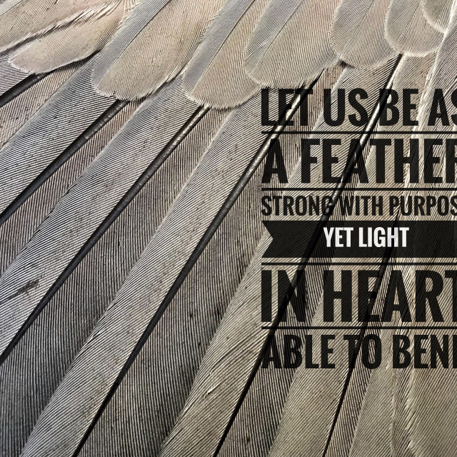 """""""Feather quote"""" stock image"""