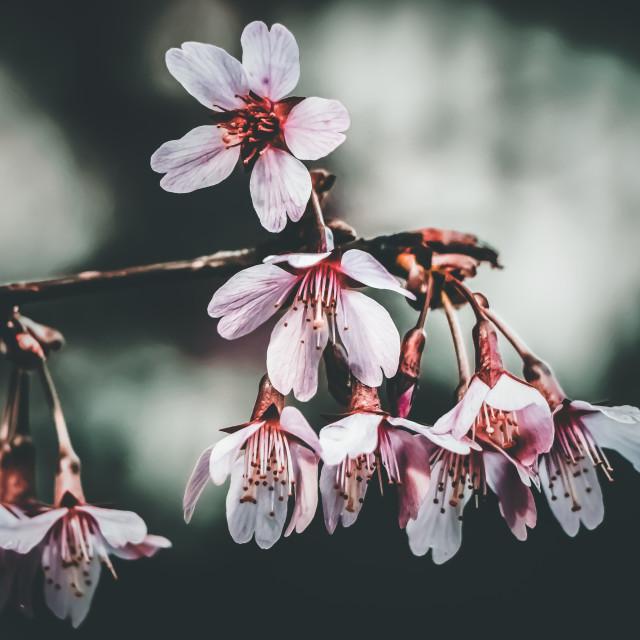 """primavera"" stock image"