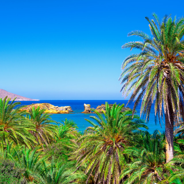 """""""Scenic landscape of palm trees, turquoise water and tropical beach, Vai, Crete, Greece."""" stock image"""