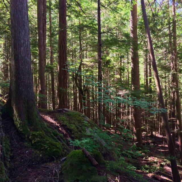 """""""Stawamus Chief Park Hike"""" stock image"""