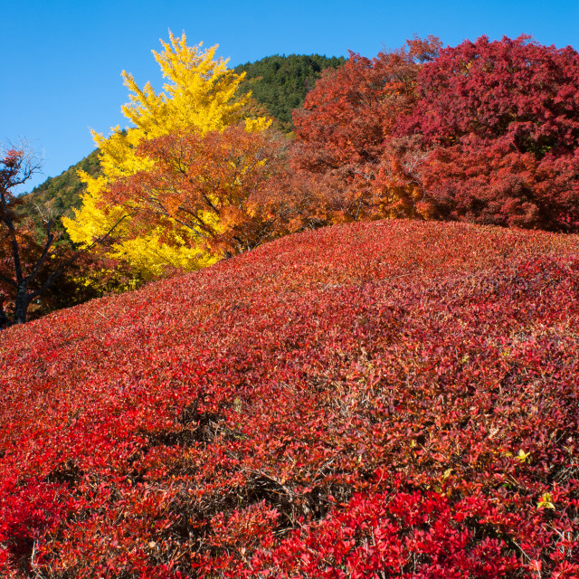 """Autumn colours"" stock image"