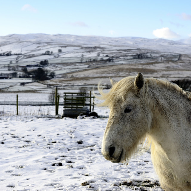 """Winter and the horse"" stock image"
