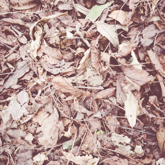 """""""nature backgrounds - carpet of dried leaves"""" stock image"""