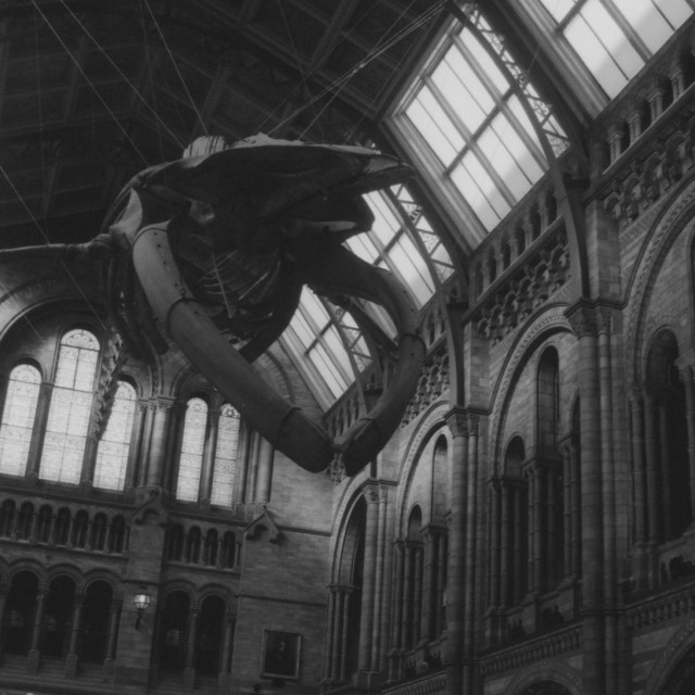 """""""The Natural History Museum"""" stock image"""