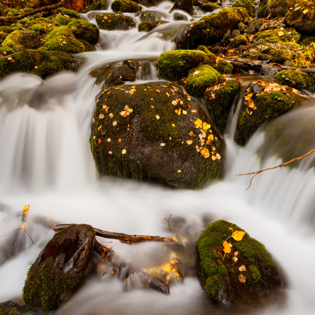 """""""Autumn color along Falls creek in the Chugach national forest"""" stock image"""