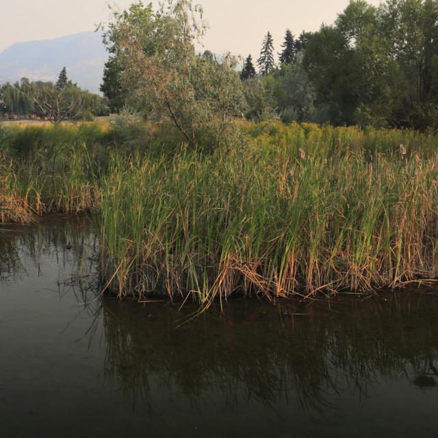 """Sunrise over the Rotary Marsh park, Okanagan Lake, Kelowna City, Okanagan..."" stock image"