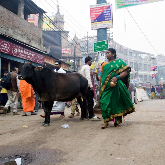 """Varanasi Street"" stock image"