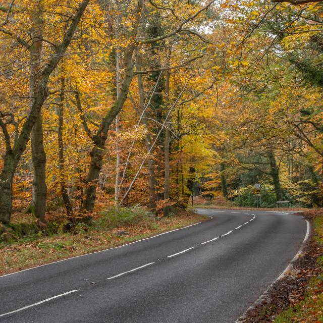 """Surrey Heath in Autumn"" stock image"