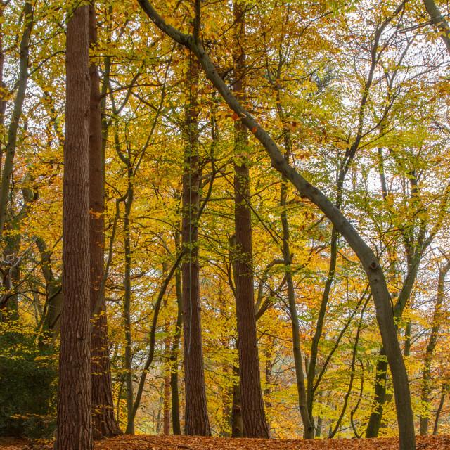 """Autumn scenes"" stock image"
