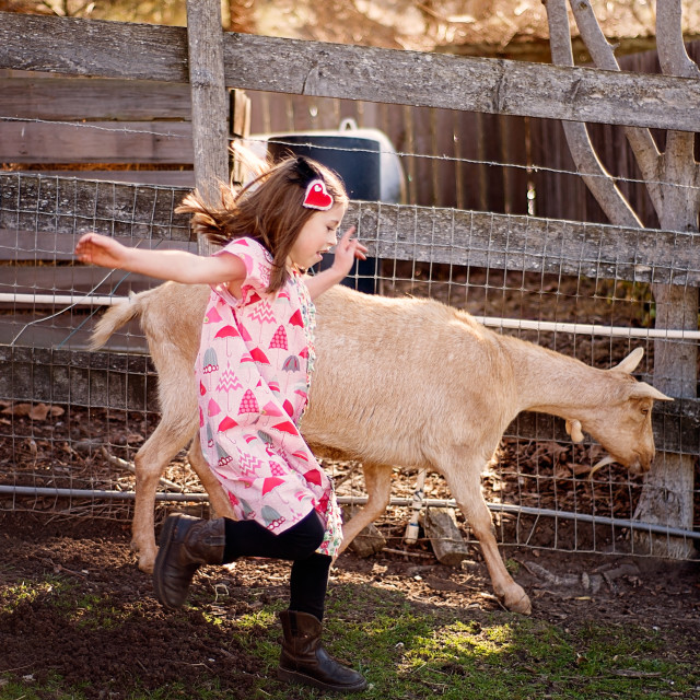 """""""LIttle Girl Running with a Goat on a Farm"""" stock image"""