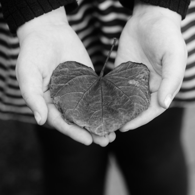 """""""Hands Holding a Heart Shaped Leaf"""" stock image"""