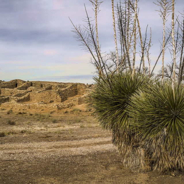 """""""Ruins And Yucca Faxoniana"""" stock image"""