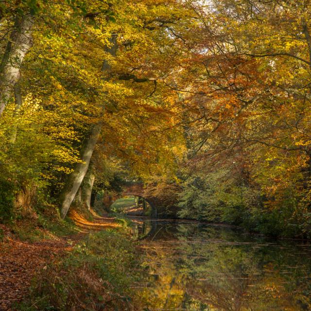 """Basingstoke Canal colour"" stock image"
