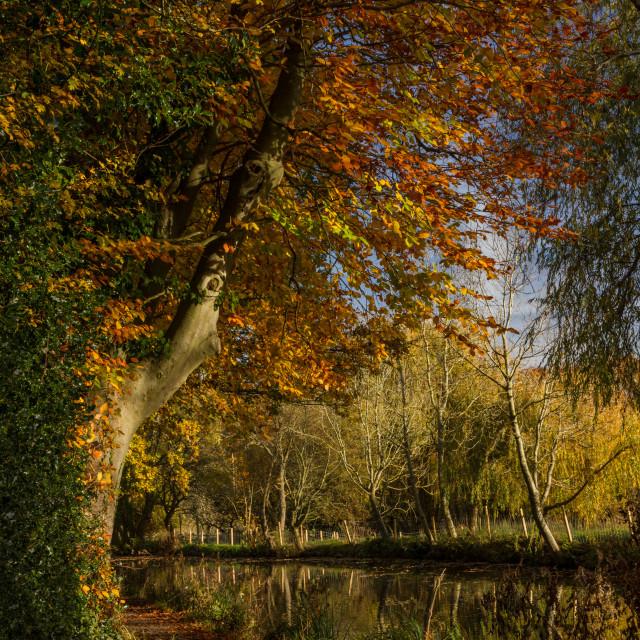 """Autumn on the Basingstoke Canal"" stock image"