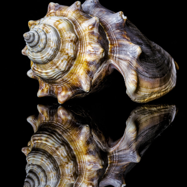 """Sea Shell Reflections 1"" stock image"