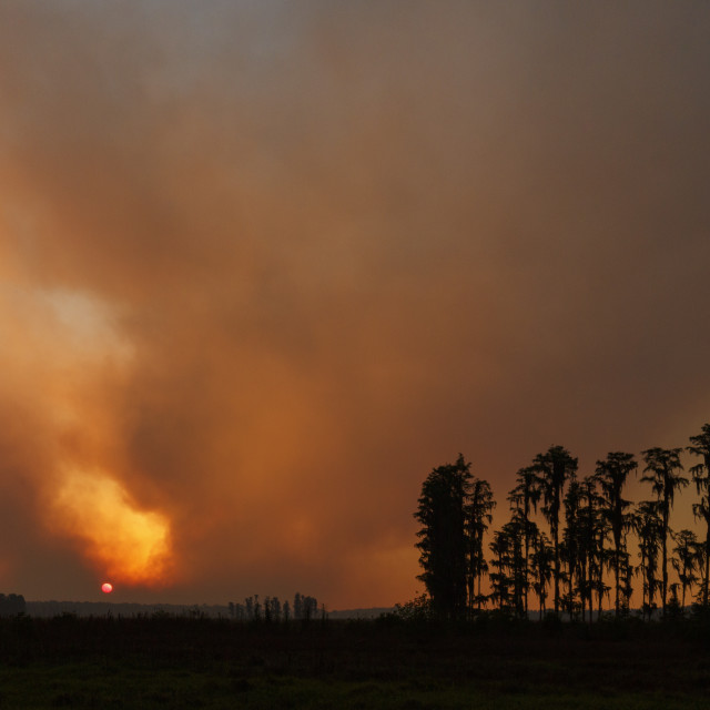 """Florida Wildfire at Sunset"" stock image"