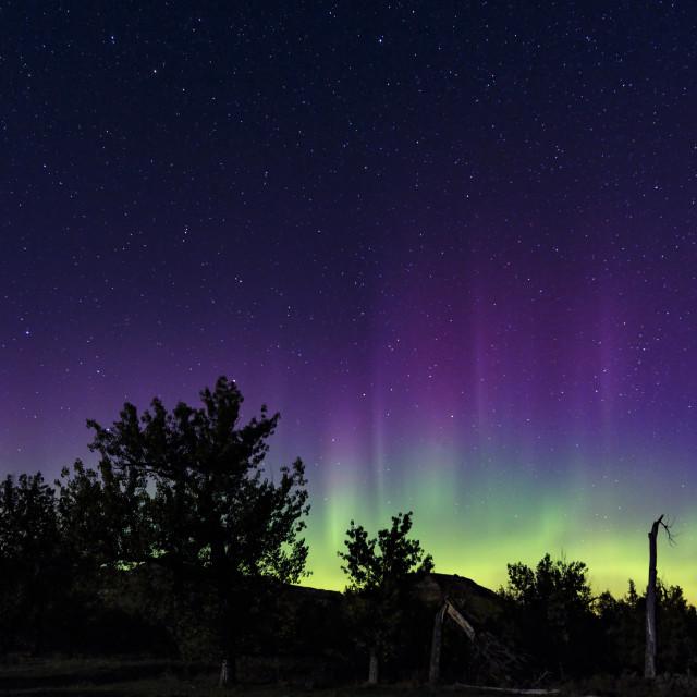 """My First Aurora"" stock image"