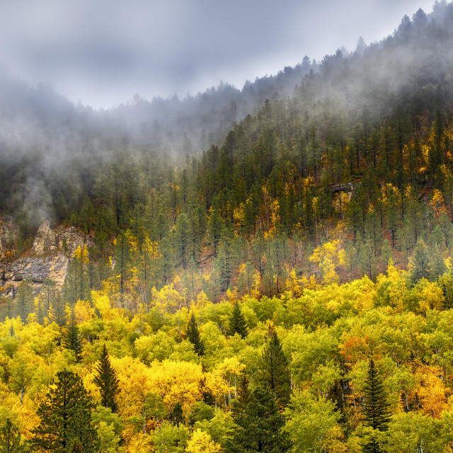 """Spearfish Canyon in Fall"" stock image"