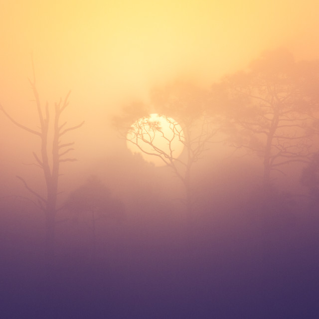 """Sunrise Breaking Through Fog"" stock image"