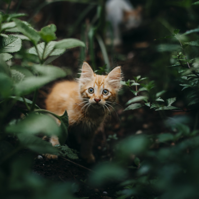 """cute little cat"" stock image"