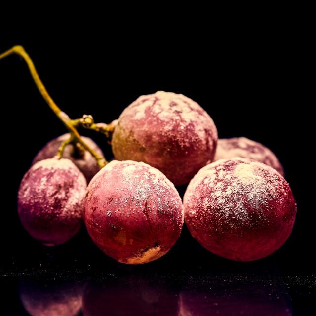 """Grapesticides"" stock image"