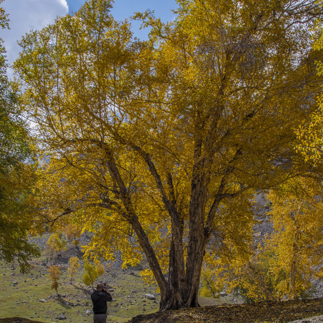 """The Autumn"" stock image"