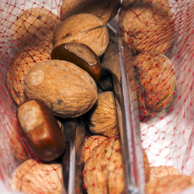 """hazelnuts and walnuts in a red net container"" stock image"