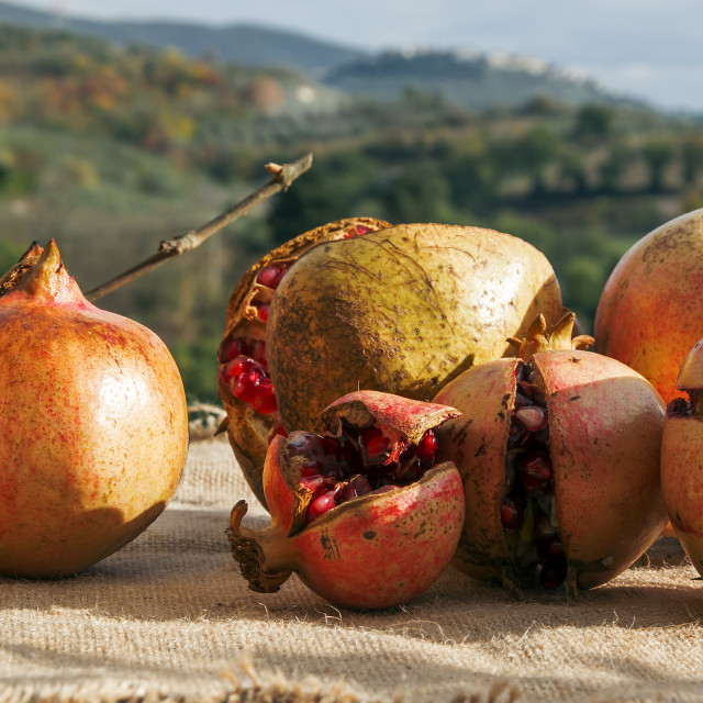 """Pomegranate fruits in countryside"" stock image"
