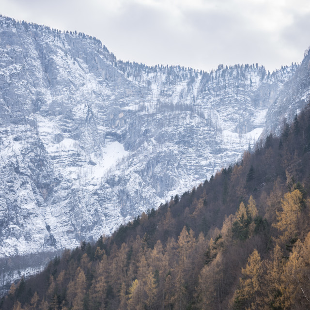 """""""Autumn forest and snowy mountains"""" stock image"""