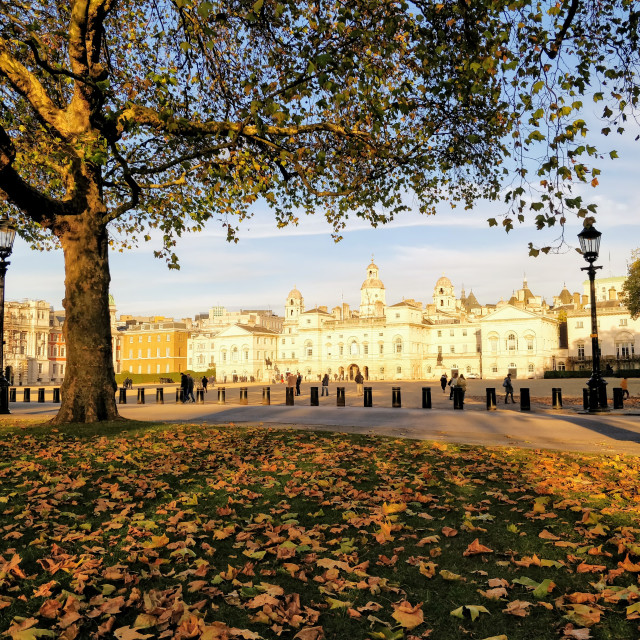 """""""Horse Guards Parade in Autumn"""" stock image"""
