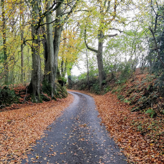 """Sussex Country Lane in Autumn"" stock image"