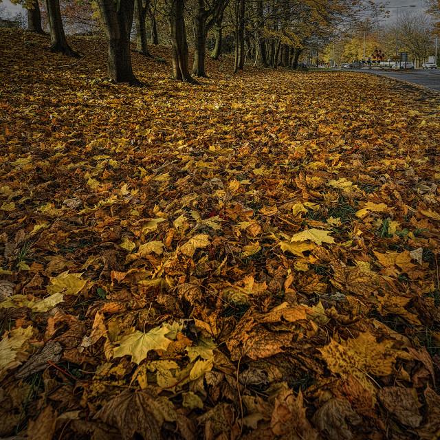 """""""Golden leaves."""" stock image"""