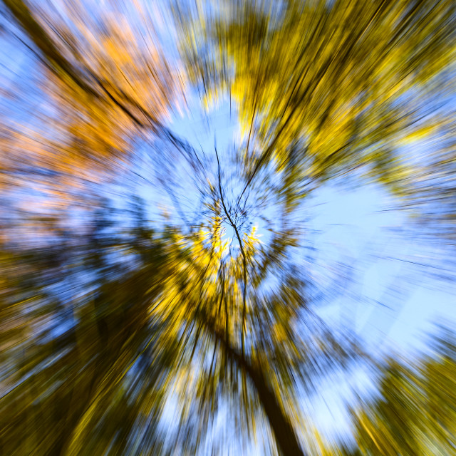 """""""Blurred trees"""" stock image"""