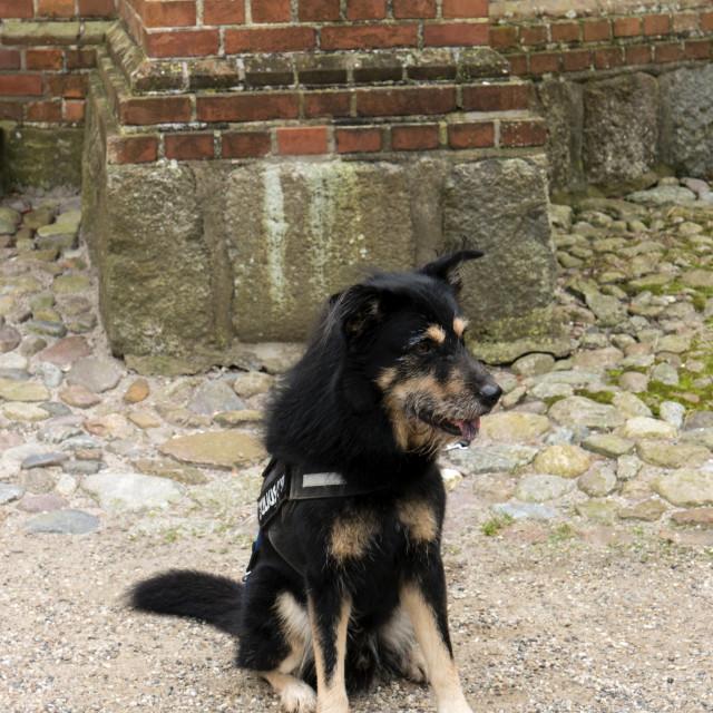 """Dog waitiing on a Dog Parking Place"" stock image"