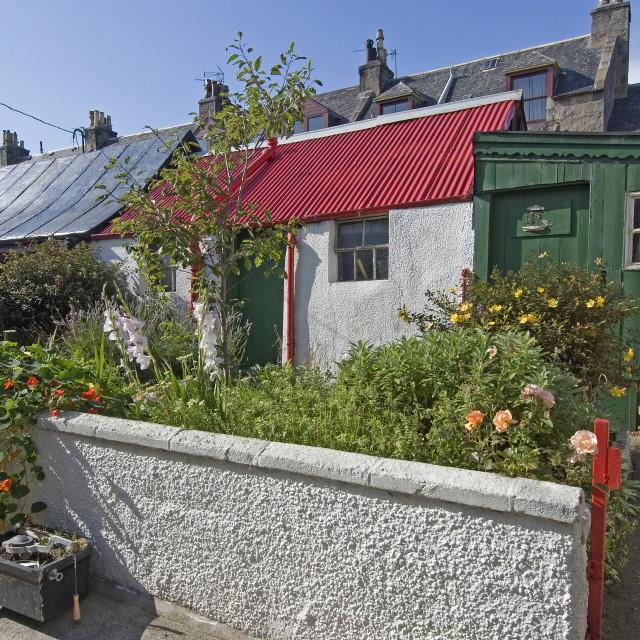 """""""Aberdeen Footdee Garden"""" stock image"""
