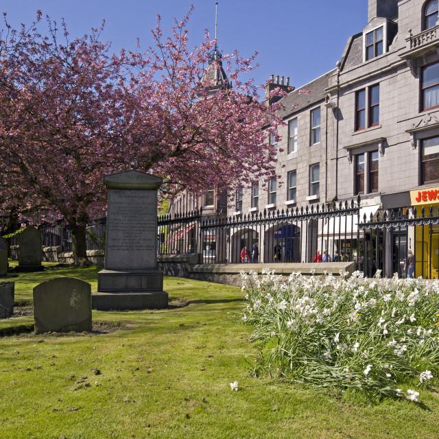 """""""Aberdeen Schoolhill Blossom"""" stock image"""