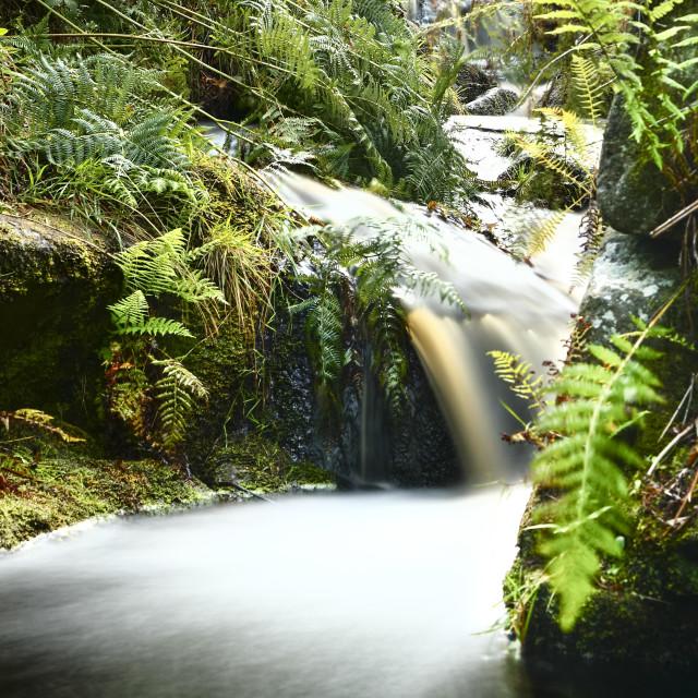 """Moorland stream"" stock image"