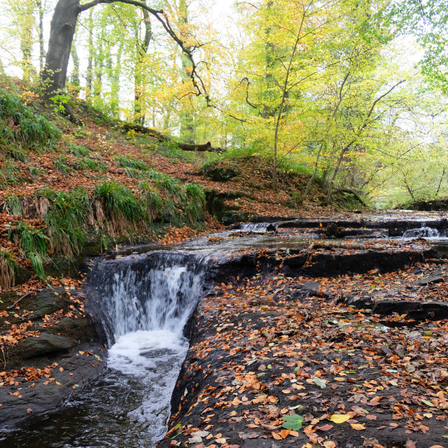 """the seaton burn holywell dene northumberland"" stock image"