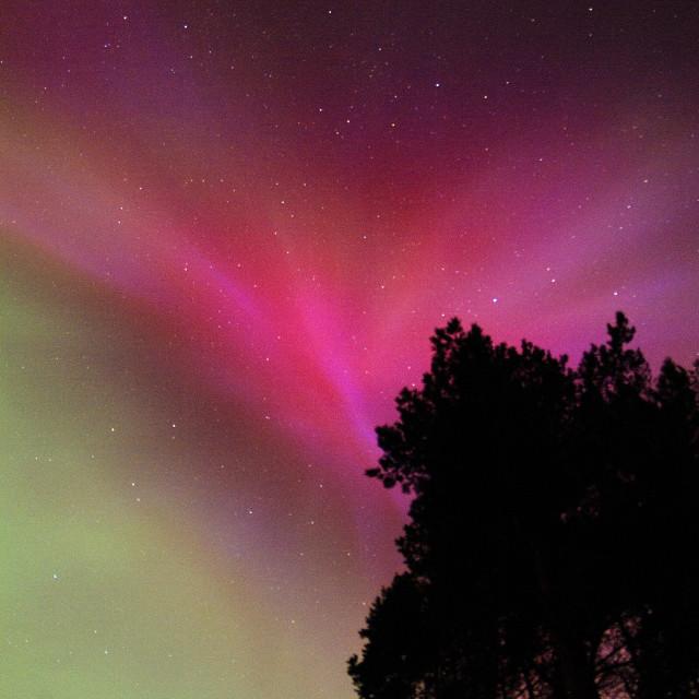 """aurora borealis over trees"" stock image"