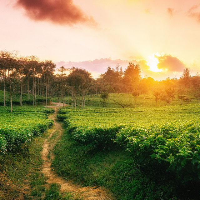 """Sunset at the Kepahiang Higlands"" stock image"